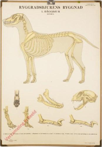 1 - Däggdjur. Rovdjur