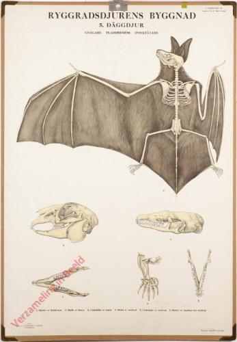 5 - Däggdjur. Gnagare, Fladdermus, Insektsätarwe