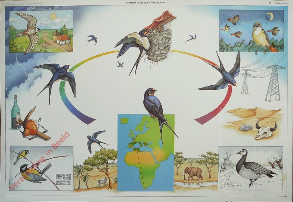 Afbeeldingsresultaat voor vogeltrek kaart